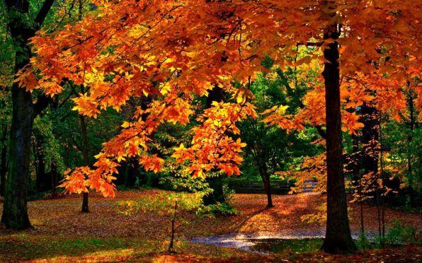 Картинки по запросу багряно золотистый лес фото