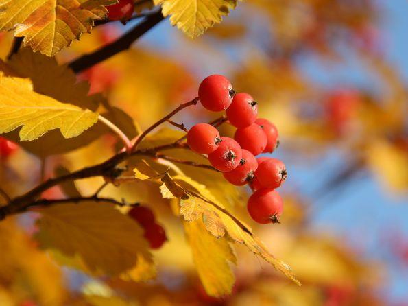 Стихи Анны Ахматовой про осень