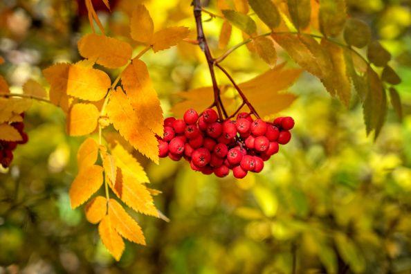 Стихи Марины Цветаевой про осень