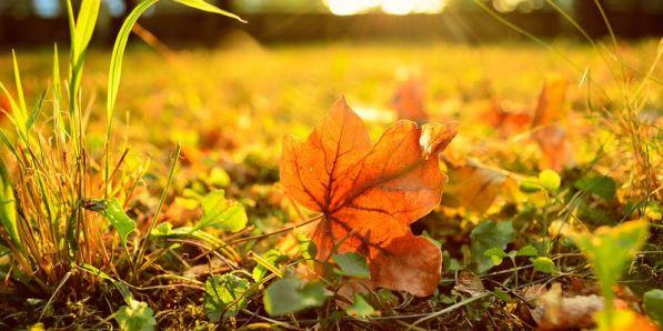 Вильгельм Александрович Зоргенфрей Сентябрь Б. Кирпичниковой Ночью сон наш нежат вьюги, к утру будят холода. На заре, в туманном круге, солнце греет сталь пруда. Мы живем в высоком доме, под горой увядший сад.