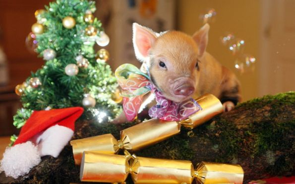 Поздравления с Новым годом Свиньи
