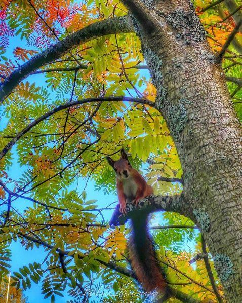 Осенняя белочка