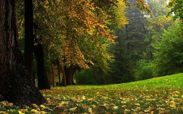 Ирина Токмакова Сентябрь Кончается лето, Кончается лето! И солнце не светит, А прячется где-то. И дождь-первоклассник, Робея немножко, В косую линейку Линует окошко.