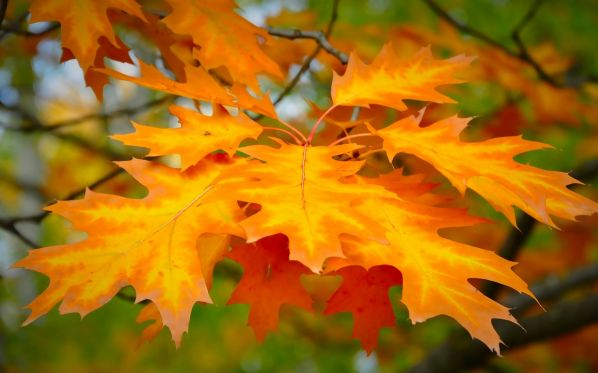 Стихи Иосифа Бродского про осень