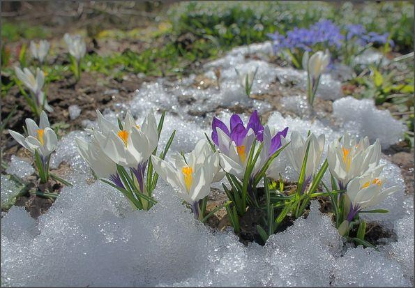 Фёдор Тютчев ~~~*~~~~*~~~~*~~~~*~~~~ Зима недаром злится, Прошла ее пора - Весна в окно стучится И гонит со двора. И все засуетилось, Все нудит Зиму вон - И жаворонки в небе Уж подняли трезвон. Зима еще хлопочет И на Весну ворчит. Та ей в глаза хохочет И пуще лишь шумит... Взбесилась ведьма злая И, снегу захватя, Пустила, убегая, В прекрасное дитя... Весне и горя мало: Умылася в снегу, И лишь румяней стала, Наперекор врагу.