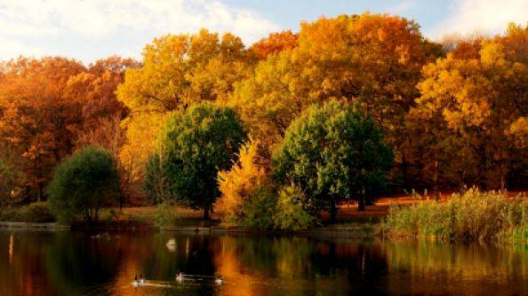 Стихи Николая Заболоцкого про осень