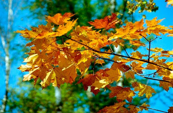 Евгений Баратынский Сентябрь 1 И вот сентябрь! замедля свой восход, Сияньем хладным солнце блещет, И луч его в зерцале зыбком вод Неверным золотом трепещет. Седая мгла виется вкруг холмов;