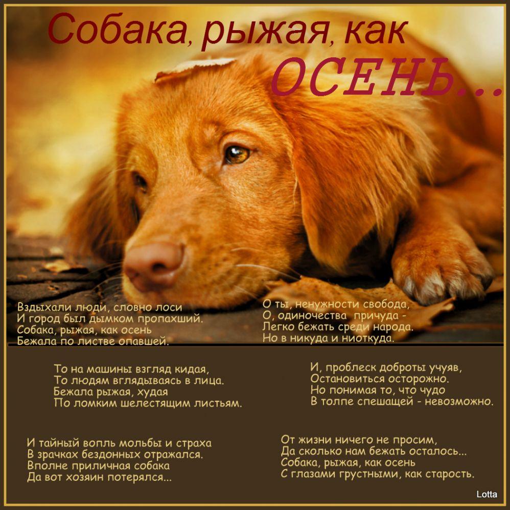 Сонник во сне видела собаку