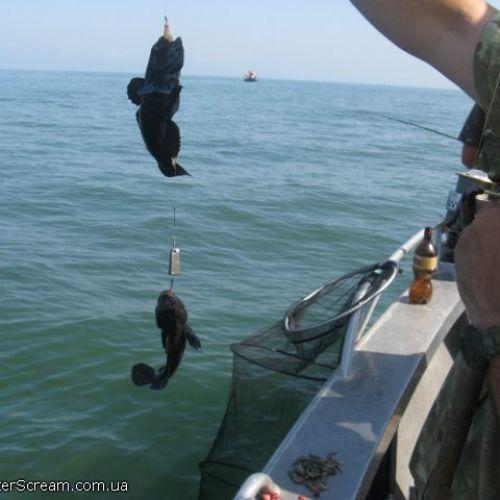 ловля бычка весной на черном море