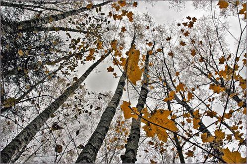 предприятий, зашели сады листвой значить пришла зима услуги