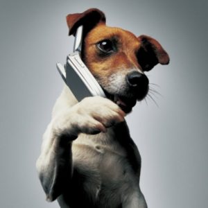 [center][b] Добрая, добрая сказка[/b]  [img=left]http://parnasse.ru/images/photos/medium/article346924.jpg[/img]  Тот случай, что произошёл В деревне, всем знакомый. Сосед к воротам подошёл И крикнул:«Есть кто дома?»  Потом стучать в ворота стал, Один раз и другой. Ему никто не отвечал. Собрался уж домой.  И вдруг собака во дворе, Как бы на стук в ответ – «Что ж не даёшь заснуть ты мне? Хозяев дома нет!»  Упал тут в обморок мужик. Понять его не сложно. Едва очнулся, в тот же миг Спросил он осторожно:  «Кому расскажешь, скажут «Ложь!» Здесь сам ушам не веришь. Хозяев дома нет, и что ж – Ты лаять не умеешь?»  В ответ услышал: «Отчего ж? Умею и умела! Тебя, соседа своего, Пугать я не хотела!»  [img=left]http://parnasse.ru/images/photos/medium/d4dbc1ae7afdd3fbb30519b887bab7f1.jpg[/img][/center]