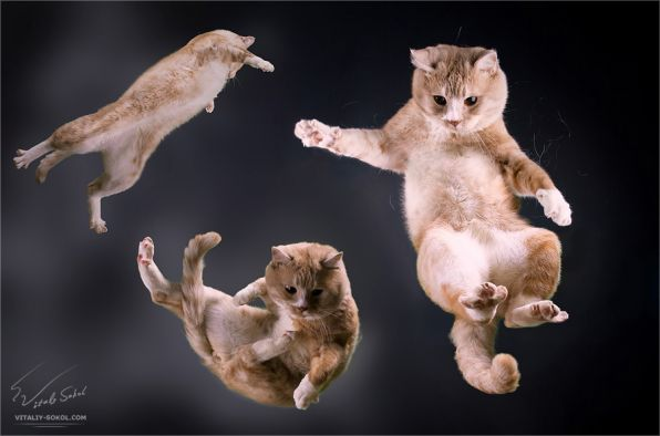 Синхронизация котов завершена успешно .
