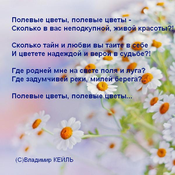 Короткий стих про полевые цветы