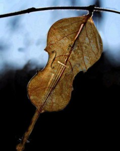 Музыка под романтик фото 487-307
