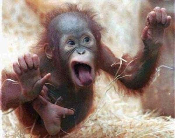 сум официальная фото рожи обезьян смешные