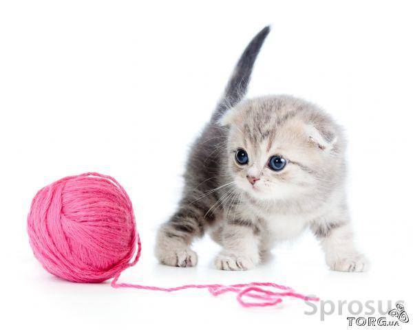 Котенок играет с клубком картинки