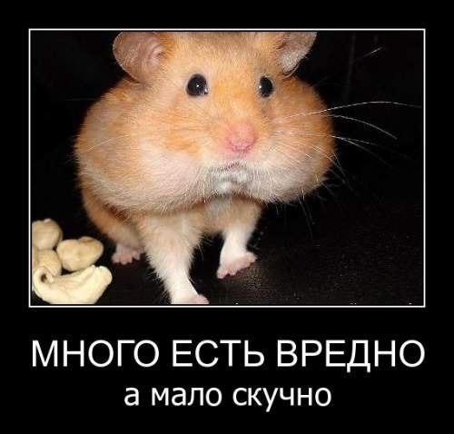 http://parnasse.ru/upload/blogs/8b30e380ee9a32b0b1f55085dd6105a8.jpg